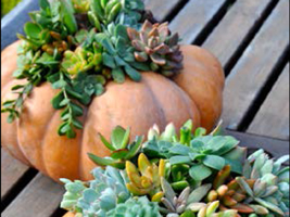 Holiday Succulent Pumpkin