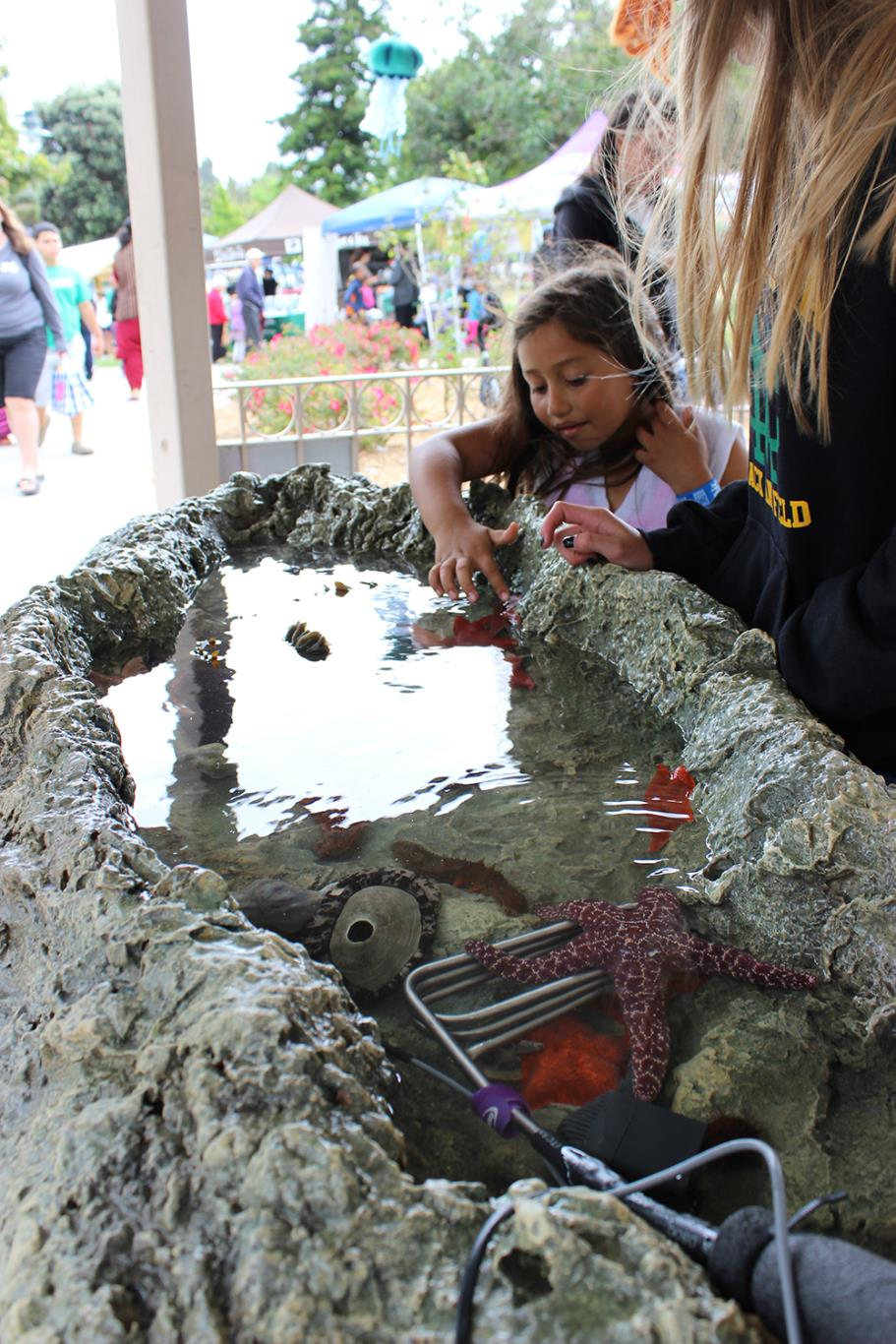 Touch Tank at Earth Day